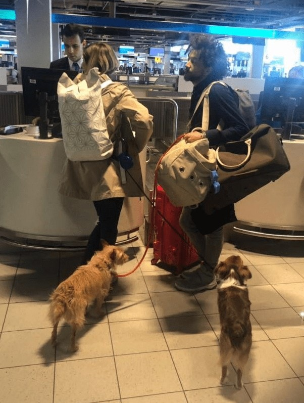 checkin at the airport with dogs