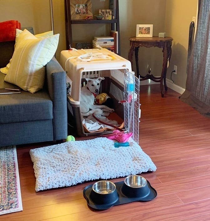 dog's crate at home