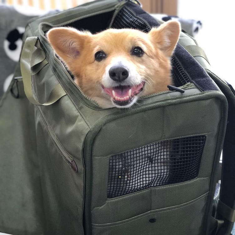 dog traveling in a soft bag