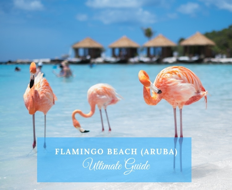 flamingo beach aruba guide