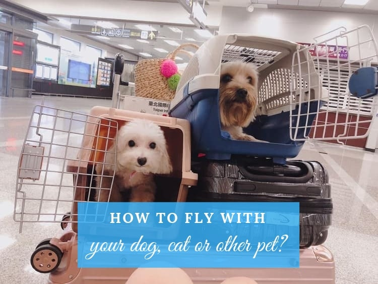 flying with a dog a cat or a pet