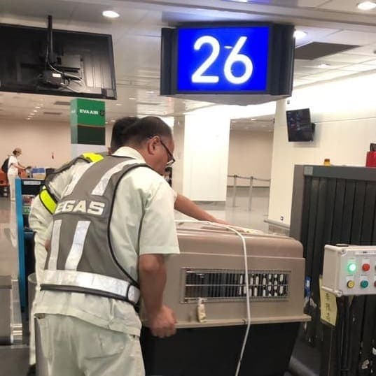 pet crate being scanned at airport