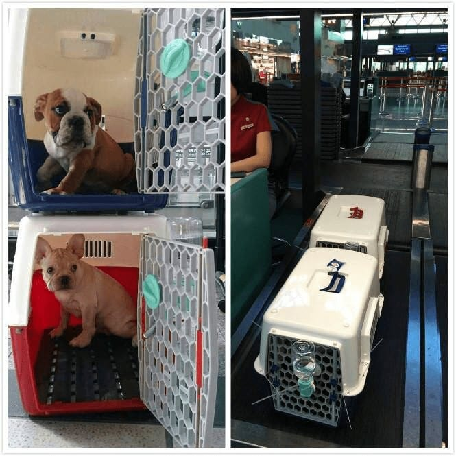 checking pet weight at airport